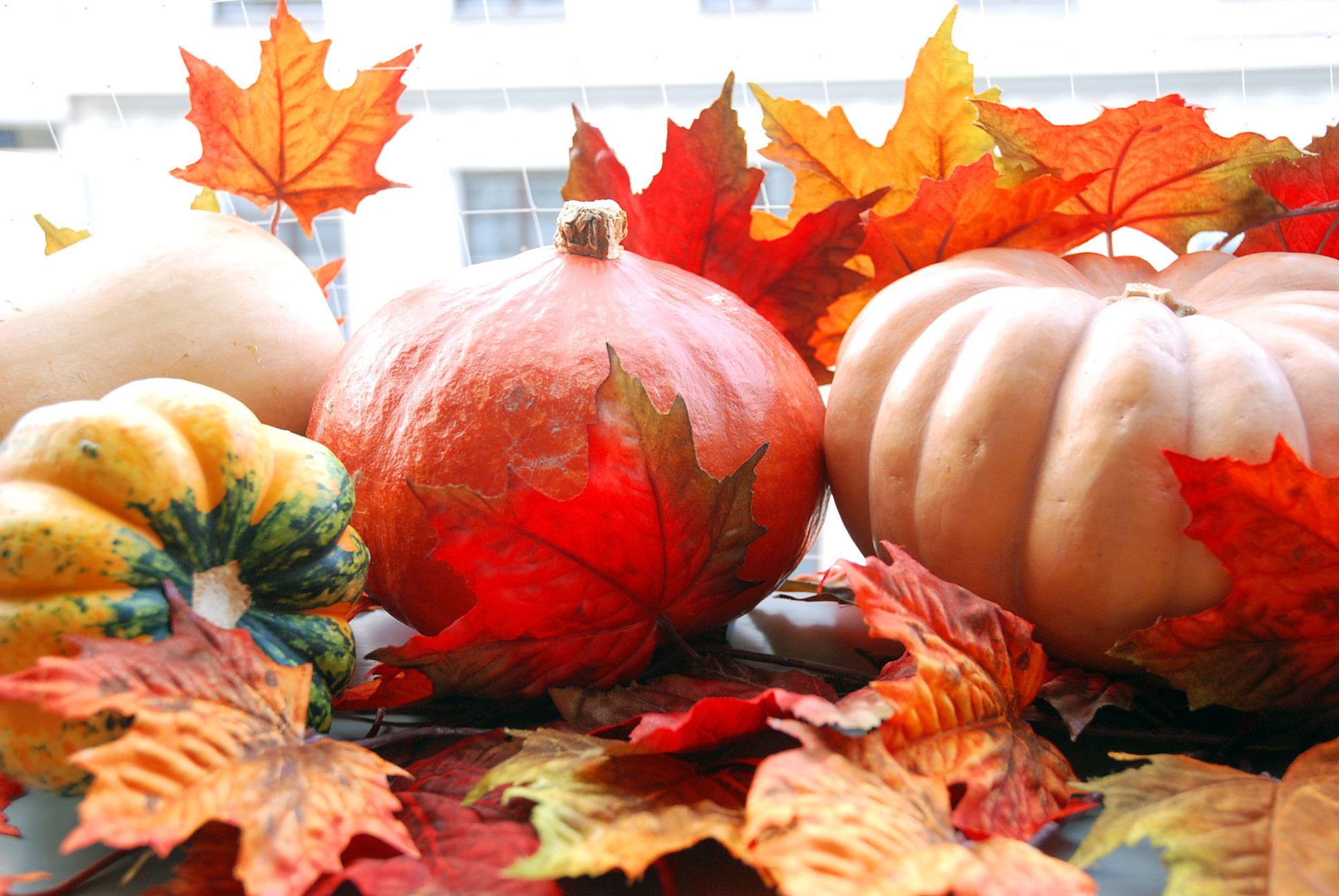 alles k rbis everything pumpkin fit happy. Black Bedroom Furniture Sets. Home Design Ideas