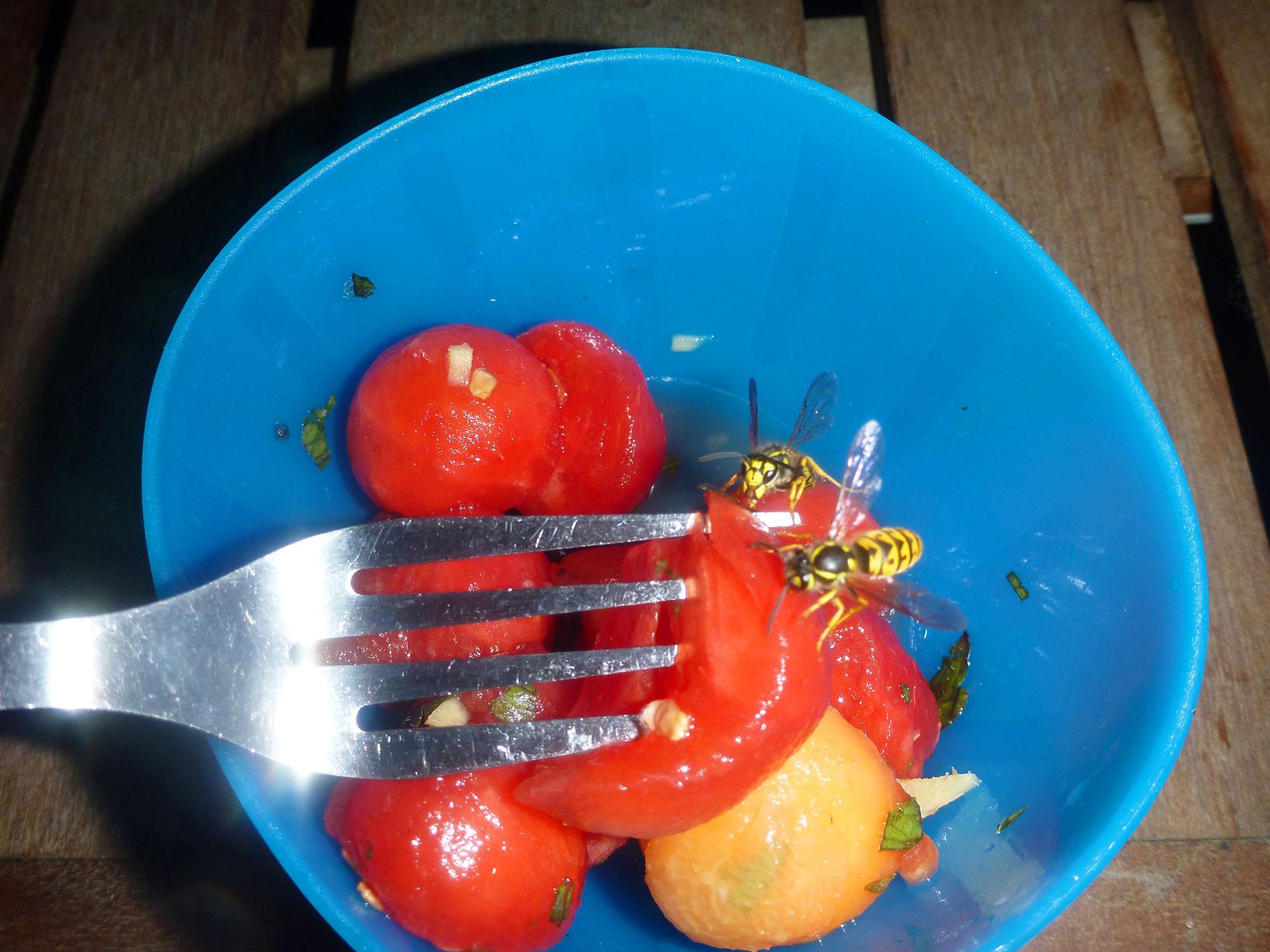 Melonen-Wespen