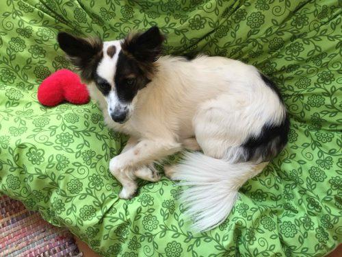 Mischlingshund Lola