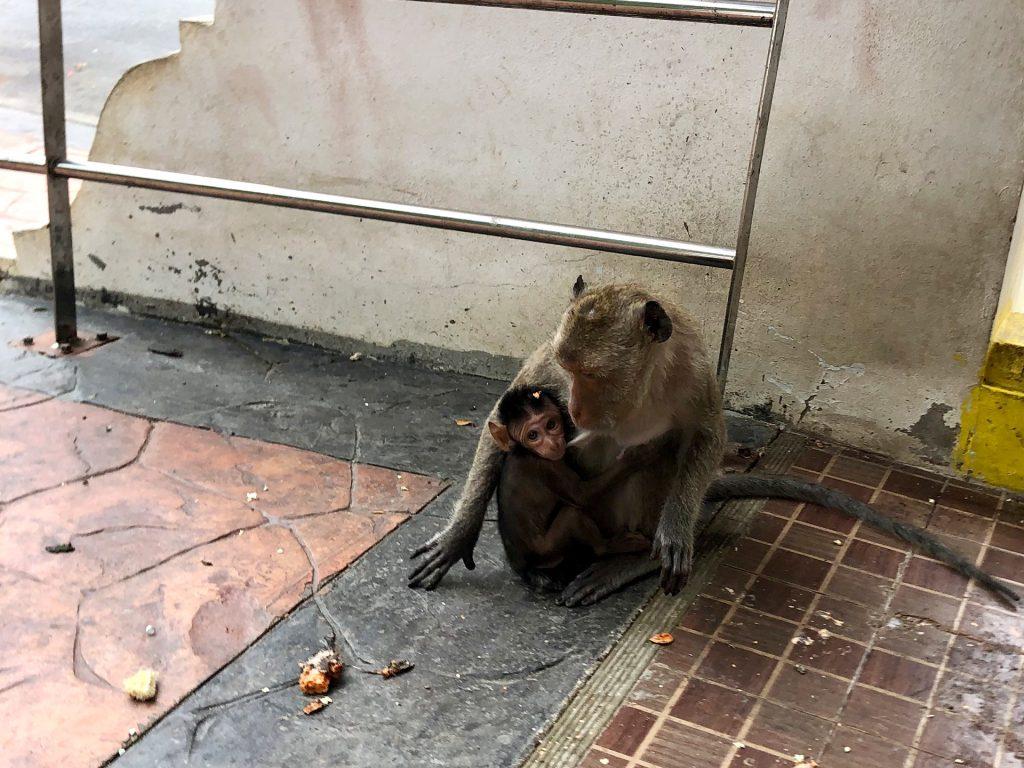 Beim Affentempel in Prachuap Khiri Khan, Thailand