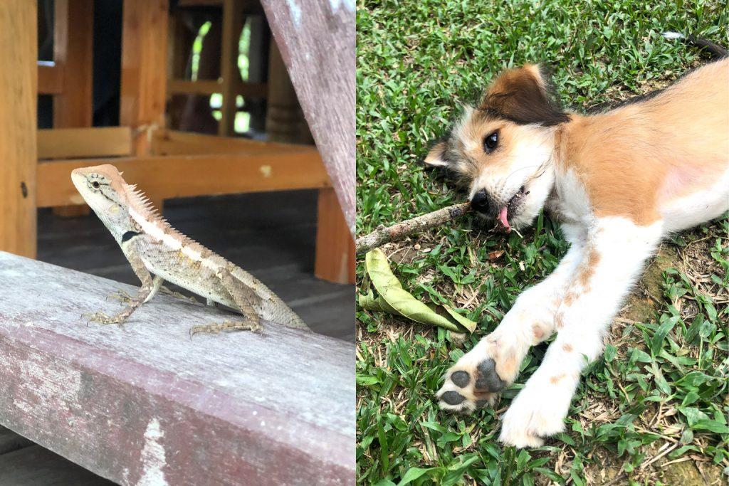 Tierwelt Thailand